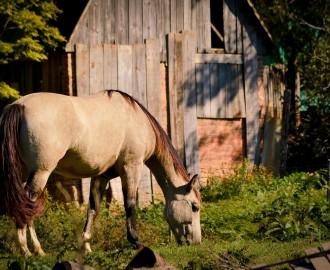 horse-164998_1280